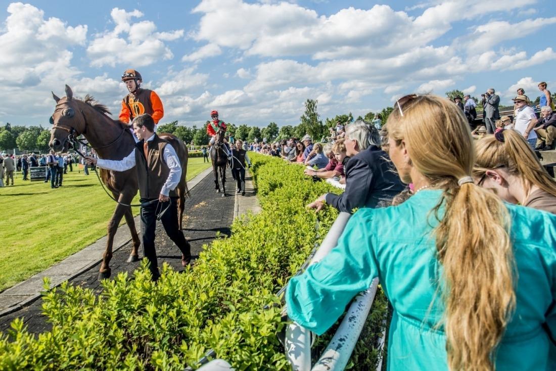 Galopp Derby: Pferde werden geführt