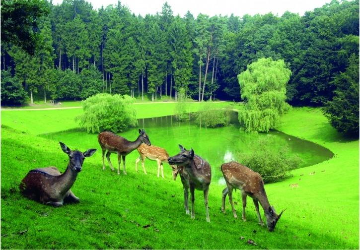Wildpark Schwarze Berge, Rosengarten, Familienausflug