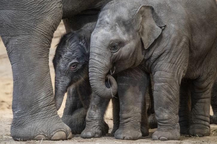 Ein Weihnachtsgeschenk der besonderen Art: Babyelefant mit seinem Halbbruder
