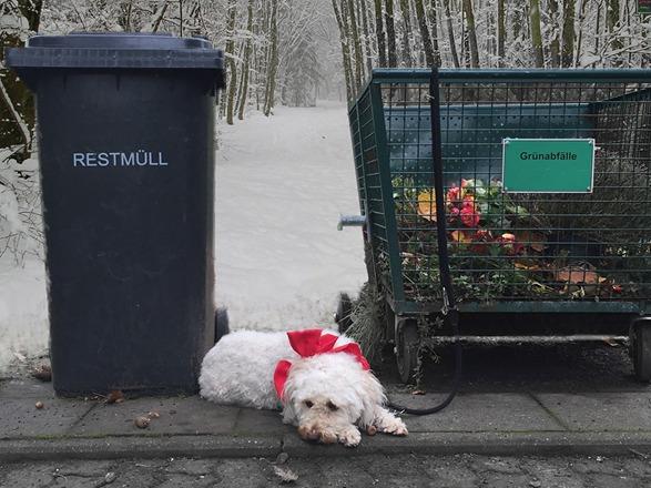 Tierheim Süderstraße: ausgesetzter Hund an Mülltonne