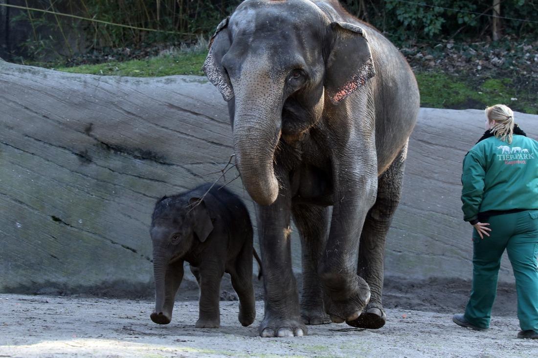 Elefantenbaby Santosh: erster Ausflug