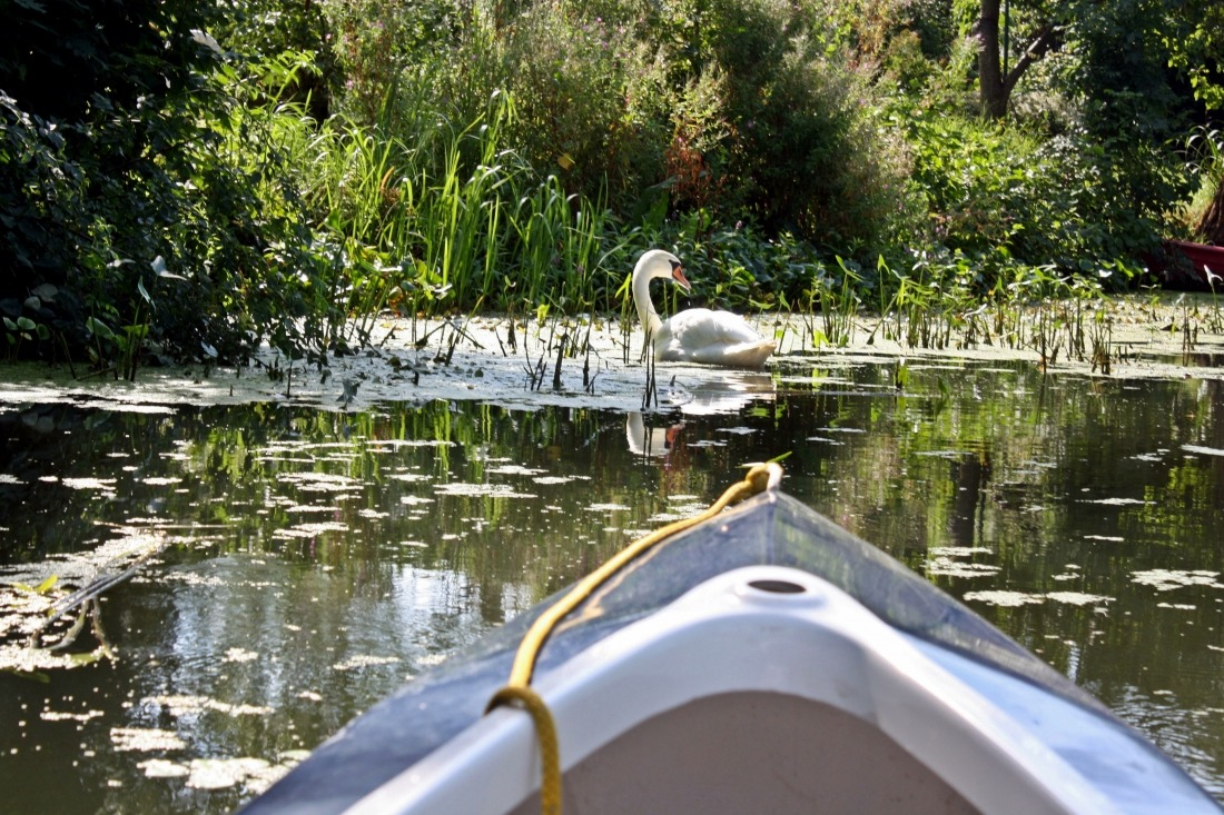 Acht Sommer-Highlights: Dove Elbe