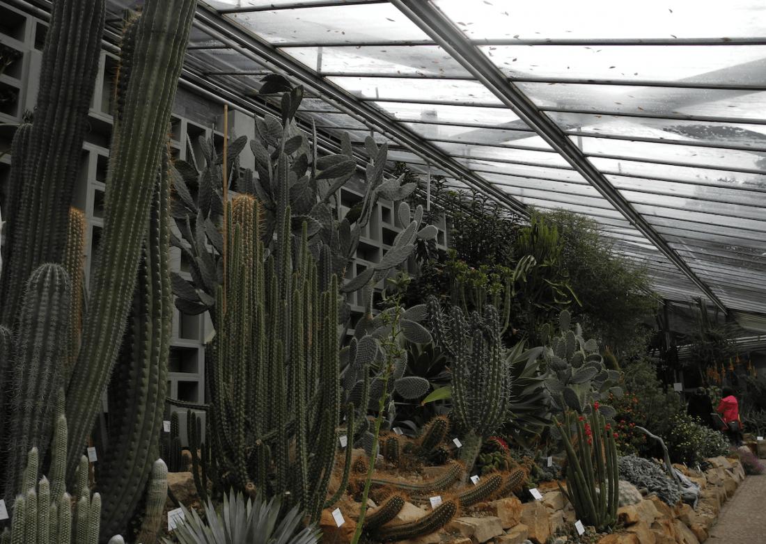 Family Time: Schaugewächshaus von Planten un Blomen