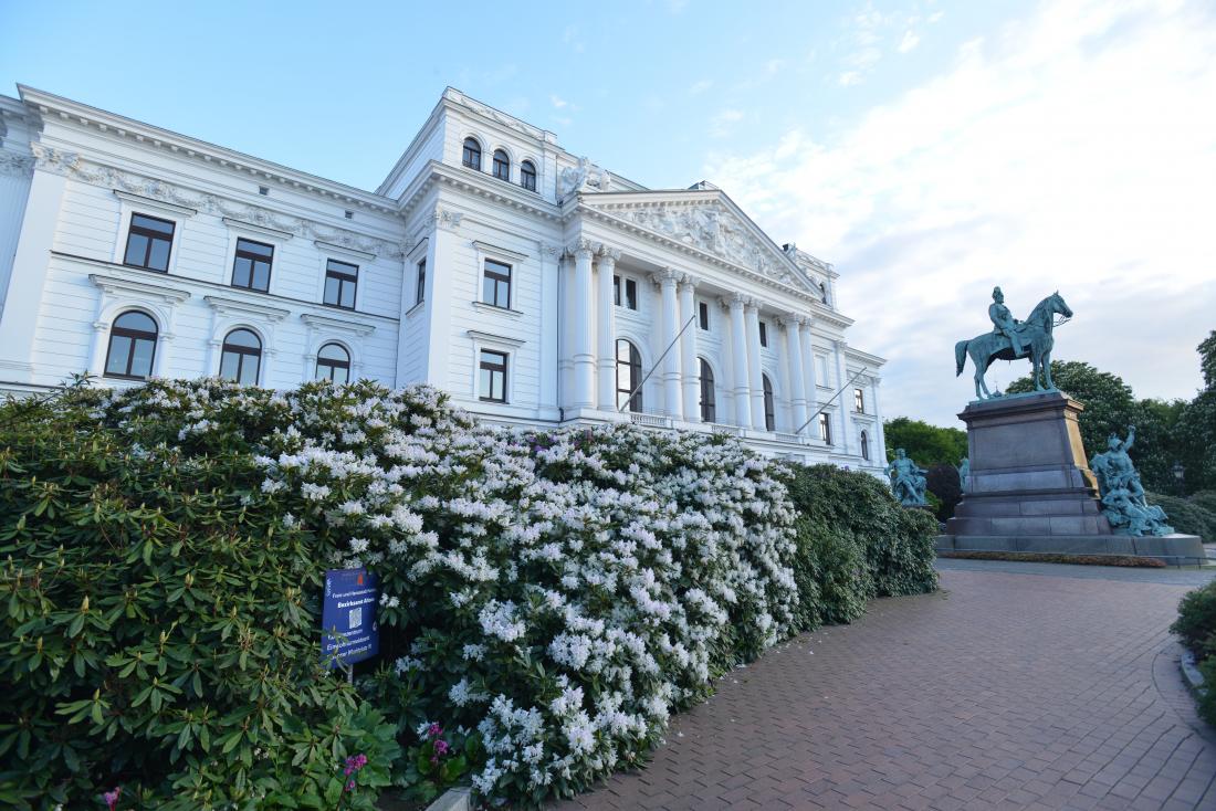 Rhododendren am Altonaer Rathaus