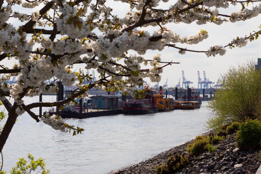 Frühling zum Gucken: Hafen