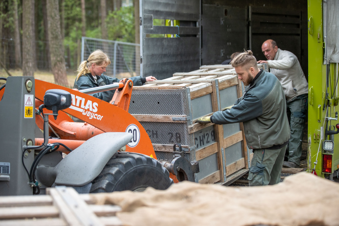 Tiger gucken: Die Transportkisten werden abgeladen