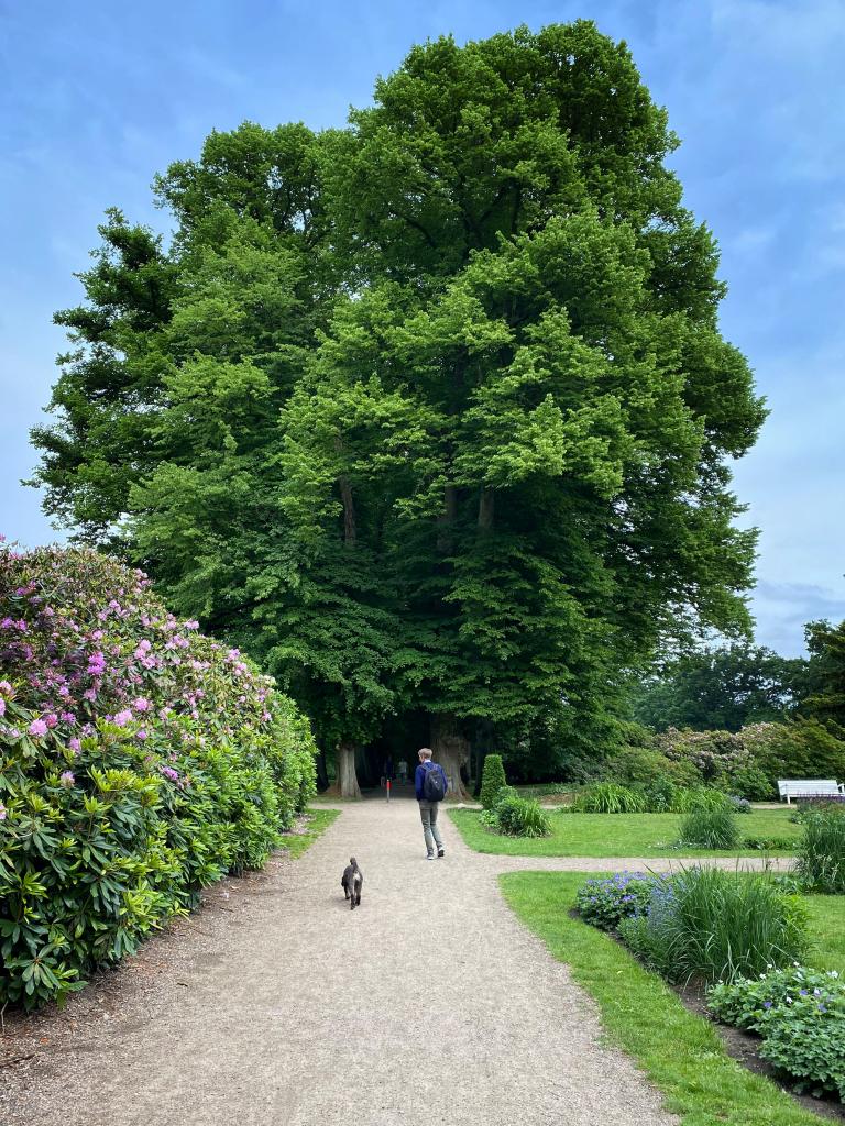 Grün & Blau: Baumallee im Hirschpark