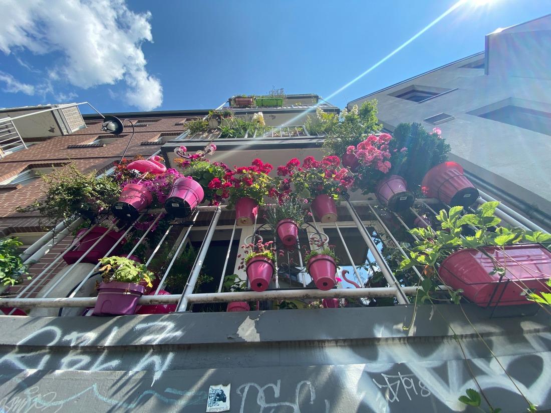 Hamburgisch: blühender Balkon in Ottensen