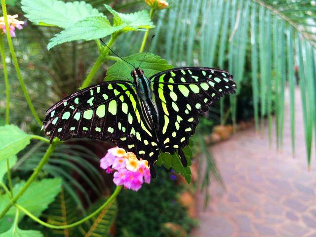 Hamburg für Familien: Falter im Garten der Schmetterlinge