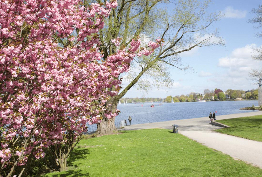 Frühling: Blütenpracht an der Alster