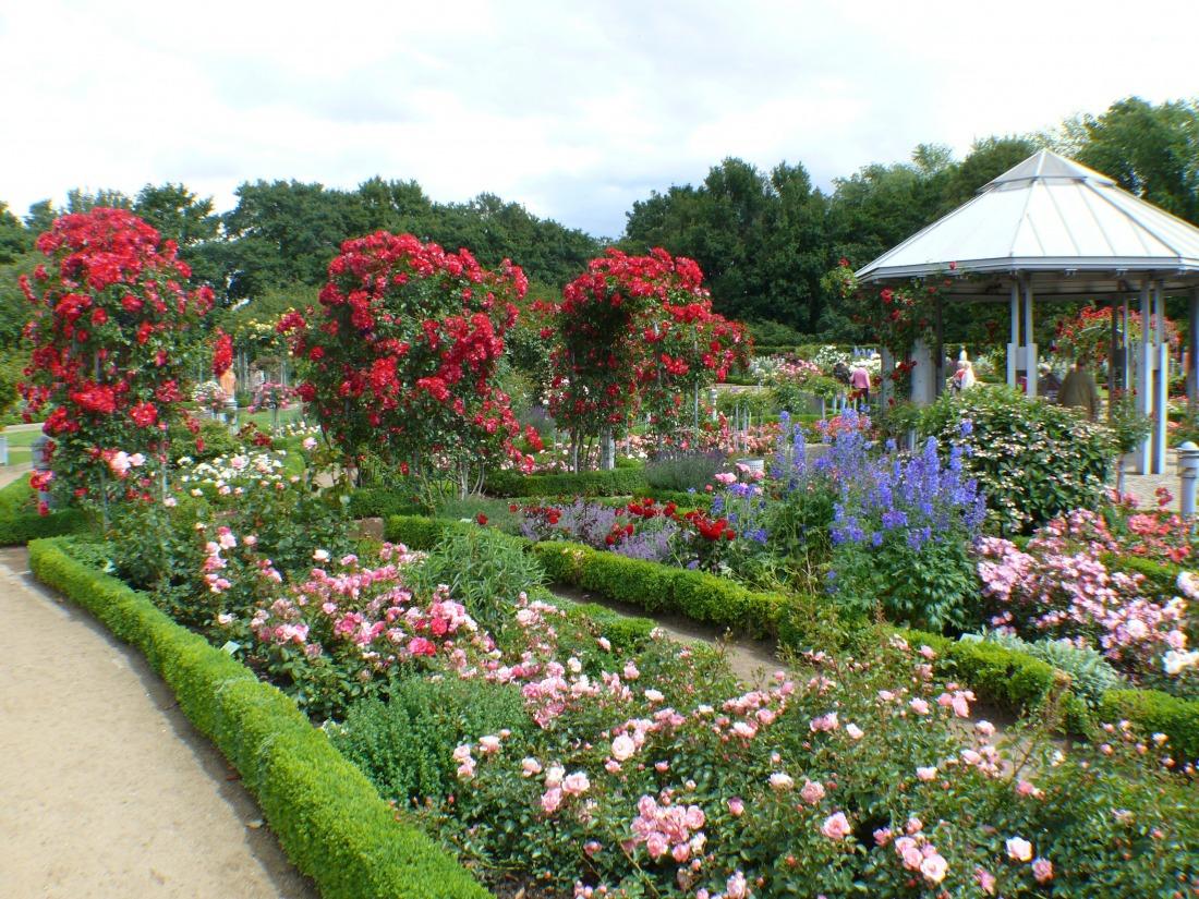 Sommer in Hamburg: Rosengarten in Planten un Blomen